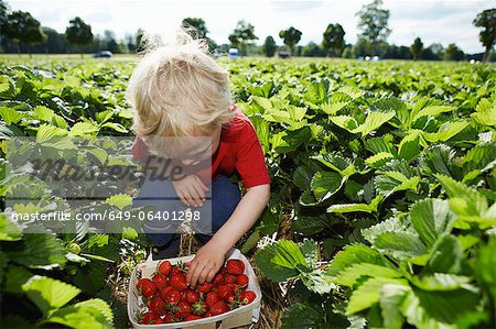 Boy picking strawberries in field Stock Photo - Premium Royalty-Free, Image code: 649-06401298