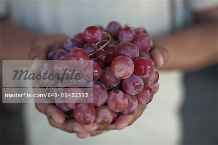 Close up of hands holding grapes Stock Photo - Premium Royalty-Free, Image code: 649-06432393