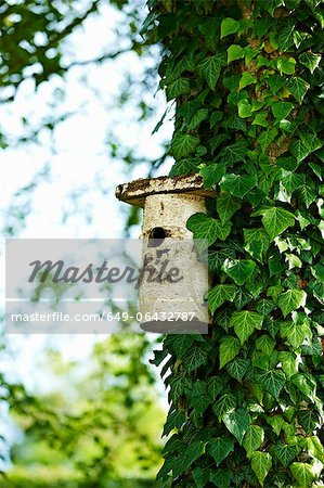 Birdhouse on ivy tree in backyard Stock Photo - Premium Royalty-Free, Image code: 649-06432787