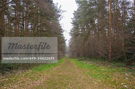 Dirt road in forest Stock Photo - Premium Royalty-Free, Image code: 649-06622635