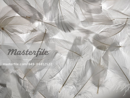 White feathers Stock Photo - Premium Royalty-Free, Image code: 649-06812522