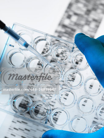 DNA sample being pipetted into multi well plate with DNA gel below Stock Photo - Premium Royalty-Free, Image code: 649-06829947