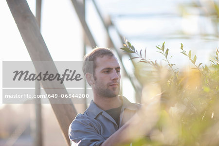 Young man working with plants Stock Photo - Premium Royalty-Free, Image code: 649-06844200