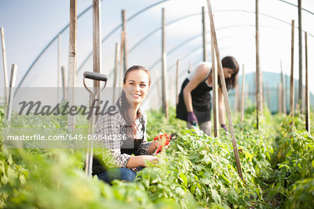 Young woman working at vegetable farm Stock Photo - Premium Royalty-Free, Image code: 649-06844236