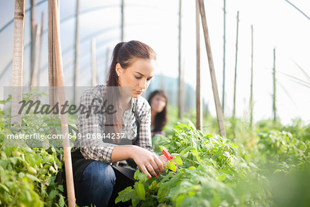 Young woman working at vegetable farm Stock Photo - Premium Royalty-Free, Image code: 649-06844237