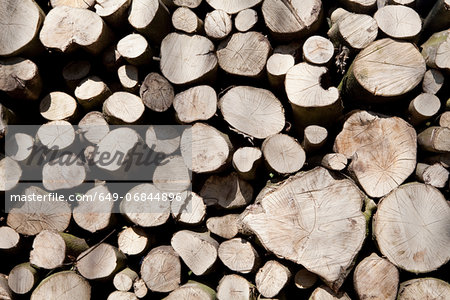 A stack of cut timber Stock Photo - Premium Royalty-Free, Image code: 649-06844896