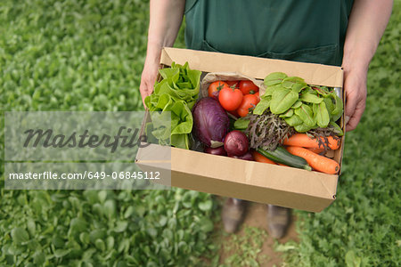 Farmer carrying organic vegetables in box for delivery, close up Stock Photo - Premium Royalty-Free, Image code: 649-06845112
