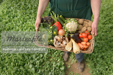 Farmer carrying organic vegetables in box for delivery, close up Stock Photo - Premium Royalty-Free, Image code: 649-06845113