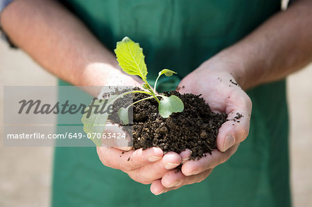 Close up of organic farmer holding seedling Stock Photo - Premium Royalty-Free, Image code: 649-07063424