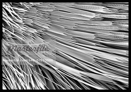 Moth scales, SEM Stock Photo - Premium Royalty-Free, Image code: 649-07063986