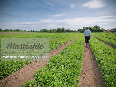 Man inspecting field of crops Stock Photo - Premium Royalty-Free, Image code: 649-07064607