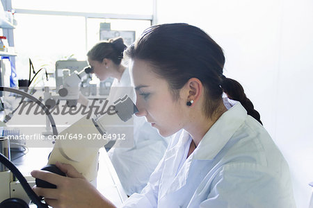 Biology students using microscopes Stock Photo - Premium Royalty-Free, Image code: 649-07064912