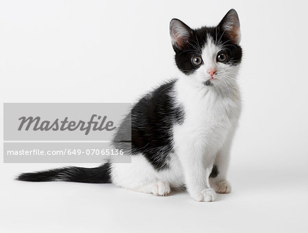 Black and white kitten Stock Photo - Premium Royalty-Free, Image code: 649-07065136
