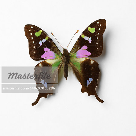 Butterfly Stock Photo - Premium Royalty-Free, Image code: 649-07065286