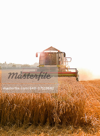 Combine harvester in field, Devon, England, UK Stock Photo - Premium Royalty-Free, Image code: 649-07119682
