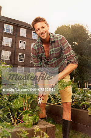 Mid adult man harvesting salad leaf on council estate allotment Stock Photo - Premium Royalty-Free, Image code: 649-07280541