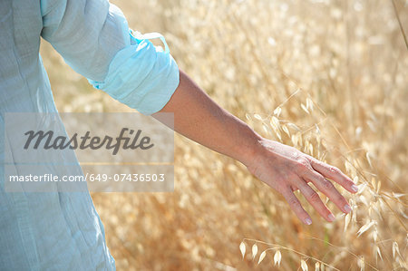 Cropped image of woman's hand in corn field Stock Photo - Premium Royalty-Free, Image code: 649-07436503