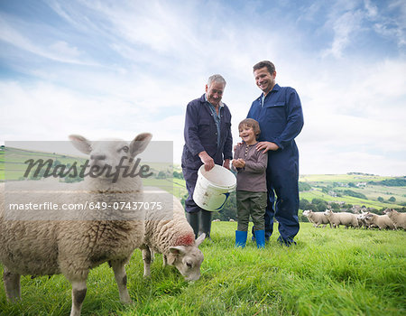 Mature farmer, adult son and grandson feeding sheep in field Stock Photo - Premium Royalty-Free, Image code: 649-07437075
