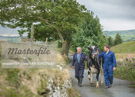 Farmer and son leading dairy cow on road Stock Photo - Premium Royalty-Free, Image code: 649-07437083