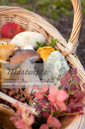 Basket of mushrooms and autumnal leaves Stock Photo - Premium Royalty-Free, Image code: 649-07437094