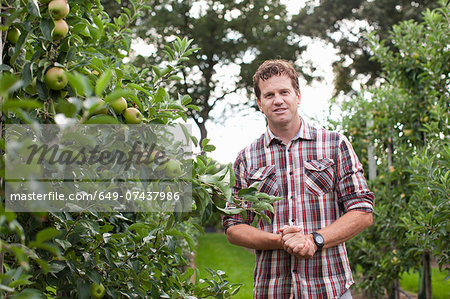 Farmer standing in apple orchard Stock Photo - Premium Royalty-Free, Image code: 649-07437986