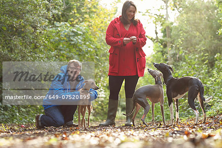 Young couple and three whippets in forest Stock Photo - Premium Royalty-Free, Image code: 649-07520895