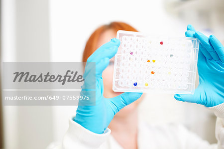 Scientist looking at multiwell tray Stock Photo - Premium Royalty-Free, Image code: 649-07559975