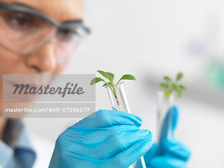Scientist viewing seedling in test tubes under trial in lab Stock Photo - Premium Royalty-Free, Image code: 649-07596077