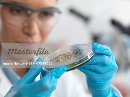 Female scientist examining micro organisms in petri dish Stock Photo - Premium Royalty-Free, Image code: 649-07596086