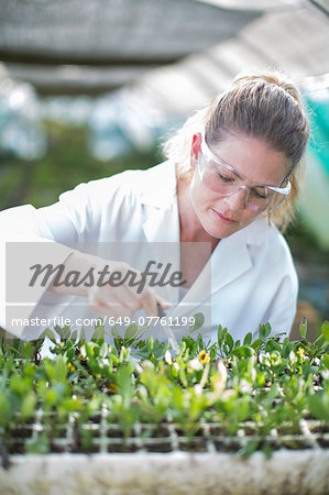 Female scientist feeding plant samples with pipetted liquid Stock Photo - Premium Royalty-Free, Image code: 649-07761199