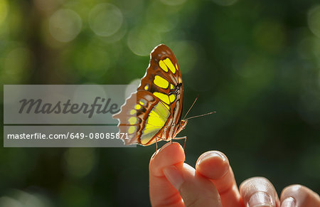 Butterfly on woman's finger Stock Photo - Premium Royalty-Free, Image code: 649-08085871