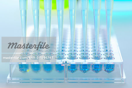 Multi pipette adding samples to multi well tray in a laboratory Stock Photo - Premium Royalty-Free, Image code: 649-08086743