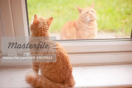 Ginger tom cat looking out from windowsill whilst another ginger tom cat looks in Stock Photo - Premium Royalty-Free, Image code: 649-08179913