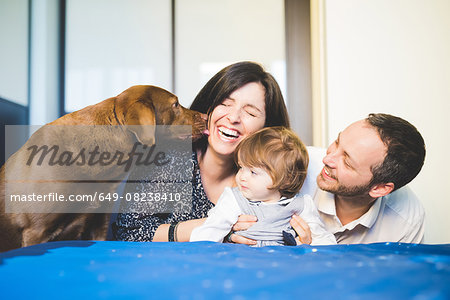 Mid adult couple laughing with toddler daughter and pet dog