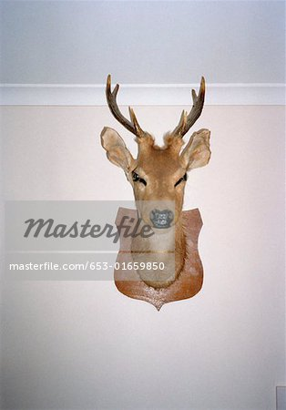 Mounted deer's head on wall Stock Photo - Premium Royalty-Free, Image code: 653-01659850