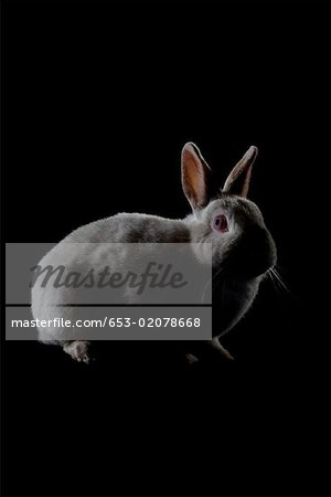 A Rabbit Stock Photo - Premium Royalty-Free, Image code: 653-02078668