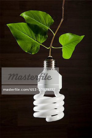 An energy saving light bulb hanging from a vine Stock Photo - Premium Royalty-Free, Image code: 653-03079737