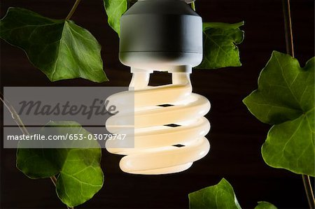 An illuminated energy saving light bulb surrounded by ivy leaves Stock Photo - Premium Royalty-Free, Image code: 653-03079747