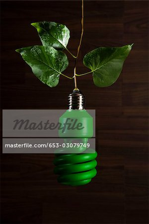 An energy saving light bulb painted green hanging from a vine Stock Photo - Premium Royalty-Free, Image code: 653-03079749