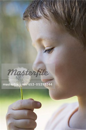 A boy holding a dandelion up to his nose Stock Photo - Premium Royalty-Free, Image code: 653-05393244