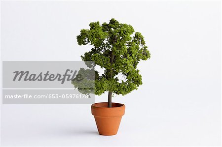 A miniature potted plant Stock Photo - Premium Royalty-Free, Image code: 653-05976178