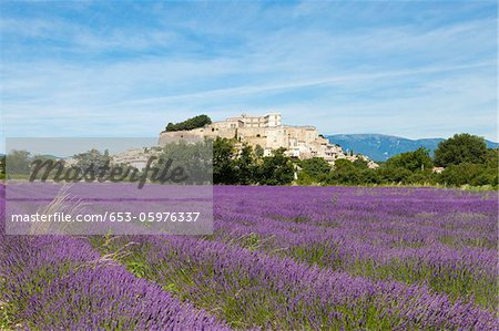 Lavender growing in the fields of Grignan, France Stock Photo - Premium Royalty-Free, Image code: 653-05976337
