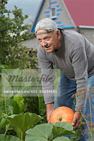 A senior man picking up a pumpkin from his garden Stock Photo - Premium Royalty-Free, Image code: 653-06534681