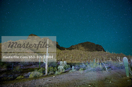Starry night over cactus filled desert in Tucson, Arizona, USA Stock Photo - Premium Royalty-Free, Image code: 653-07233984