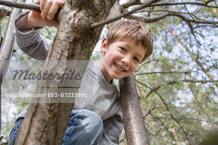A young cheerful boy climbing a tree Stock Photo - Premium Royalty-Free, Image code: 653-07233991