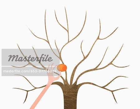 A hand picking orange from bare tree against white background Stock Photo - Premium Royalty-Free, Image code: 653-07708096