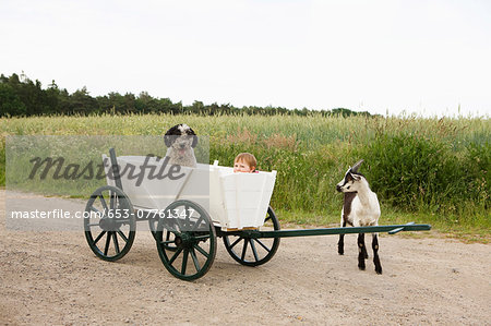 Baby girl and Portuguese Water Dog in cart, goat standing near field in countryside, near Wiendorf, Rostock District, Germany Stock Photo - Premium Royalty-Free, Image code: 653-07761347