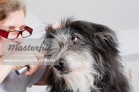 Female vet examining dog's ear in clinic Stock Photo - Premium Royalty-Free, Image code: 653-08276781