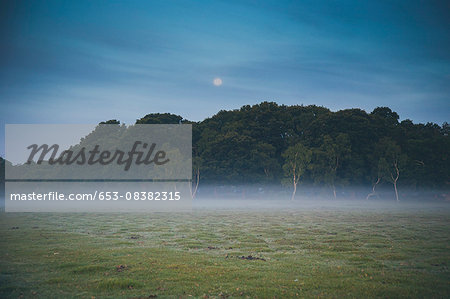 Trees on field in foggy weather at dusk Stock Photo - Premium Royalty-Free, Image code: 653-08382315