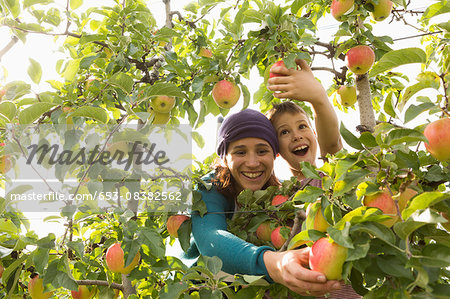 Cheerful mother and son picking apples at orchard Stock Photo - Premium Royalty-Free, Image code: 653-08382562